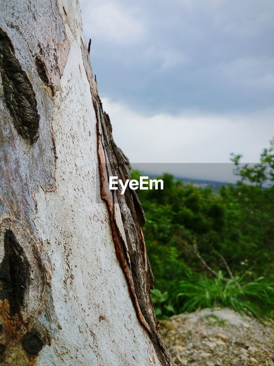 sky, day, focus on foreground, nature, close-up, outdoors, no people, tree, cloud - sky, textured, cliff, growth, beauty in nature