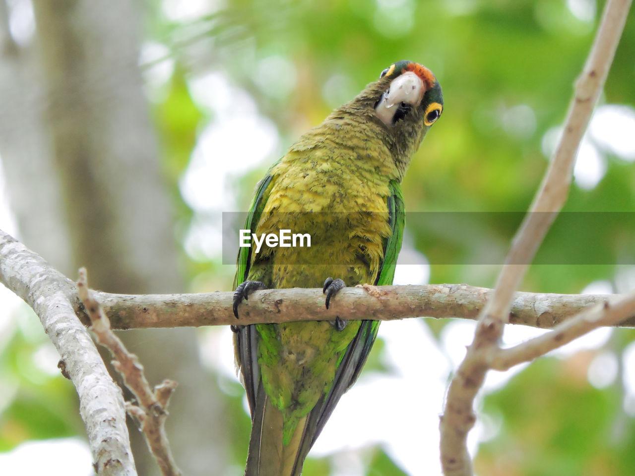 CLOSE-UP OF BIRD PERCHING ON TREE BRANCH