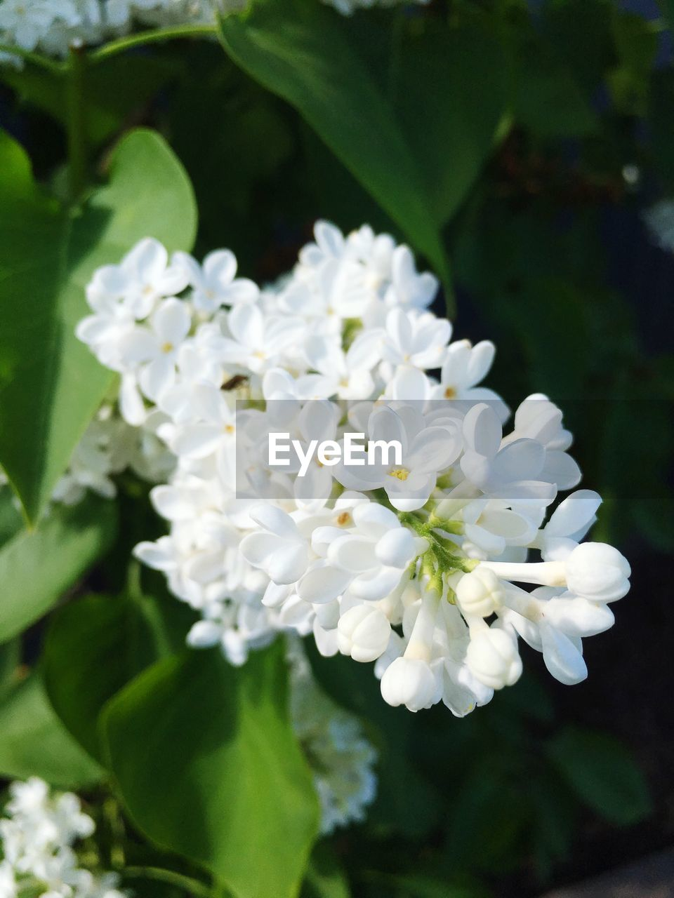 flower, white color, nature, beauty in nature, growth, petal, fragility, plant, no people, freshness, leaf, close-up, blooming, scented, day, outdoors, flower head