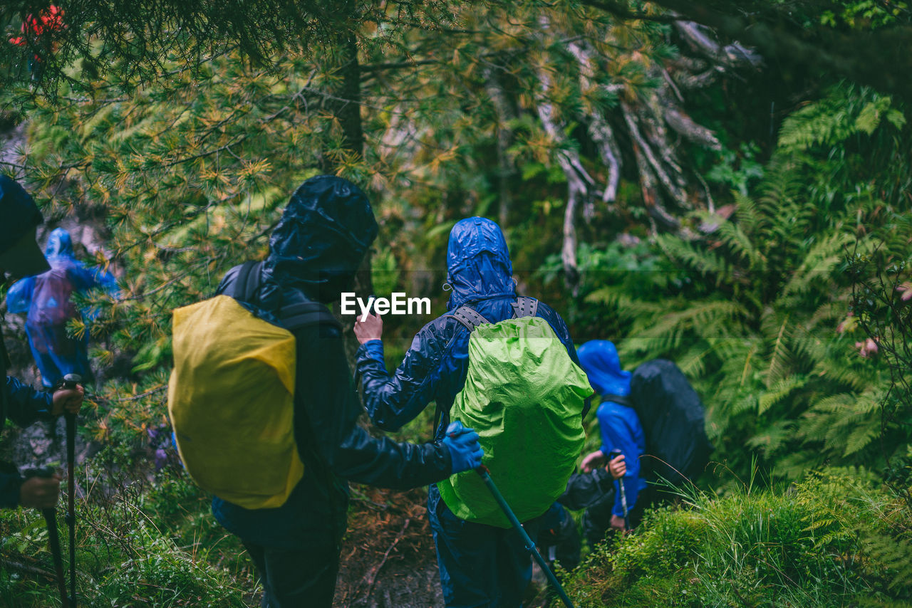 Rear View Of Hikers Hiking In Forest During Rainy Season