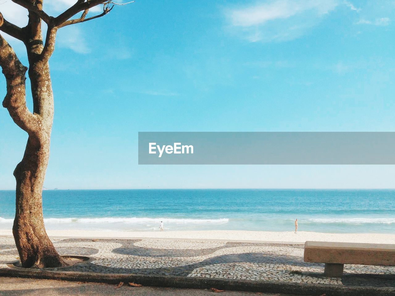 TREE AND BENCH AGAINST A SUNNY BEACH IN BRAZIL