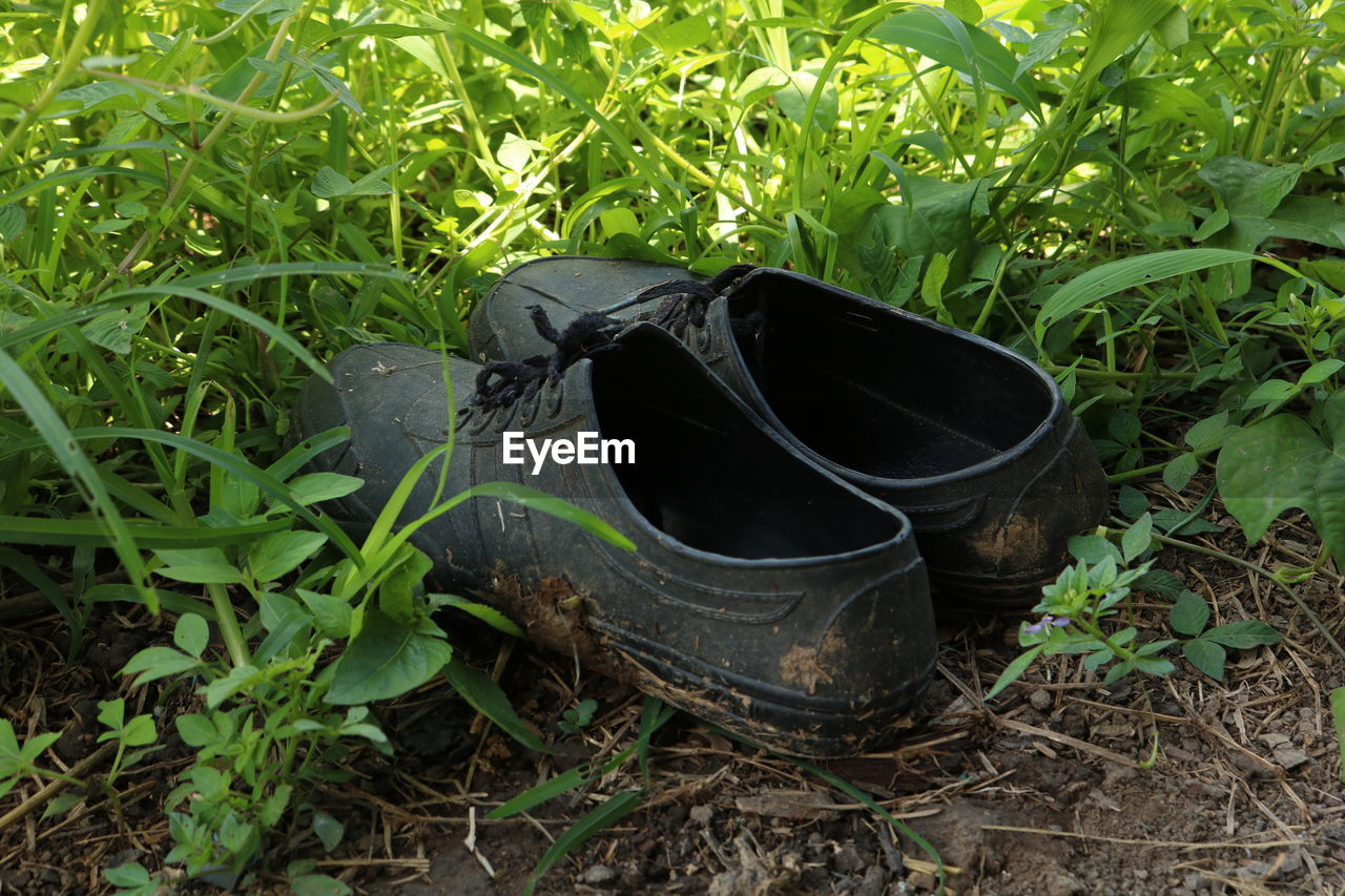 plant, growth, nature, land, grass, leaf, plant part, day, high angle view, field, outdoors, no people, green color, abandoned, close-up, dirt, metal, black color, container, sunlight, pollution