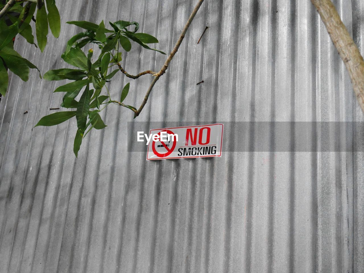 communication, text, western script, leaf, plant part, sign, no people, plant, day, nature, capital letter, wall - building feature, outdoors, growth, red, information, architecture, built structure, close-up, guidance, corrugated, iron
