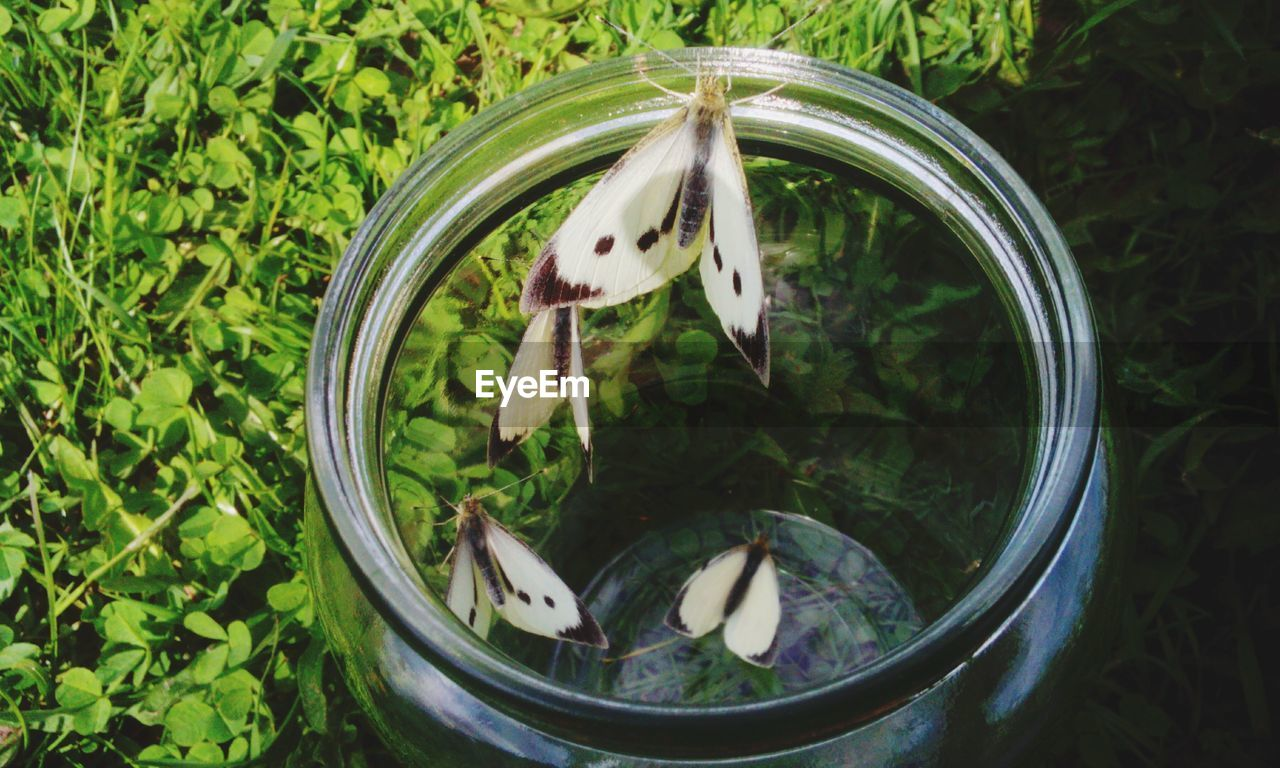Close-Up Of Butterflies In Glass Jar By Plants