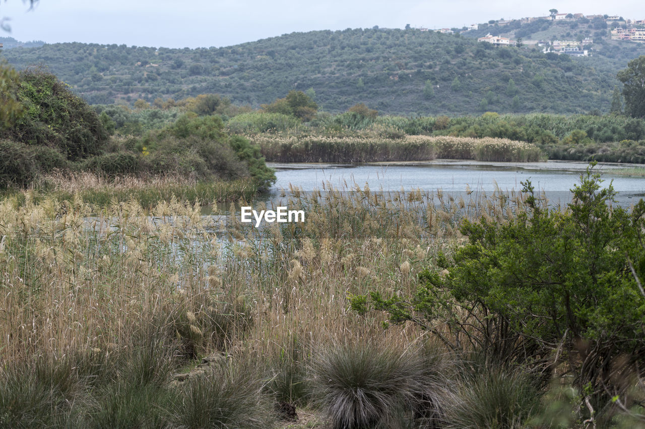 plant, water, scenics - nature, tranquil scene, beauty in nature, tranquility, tree, landscape, environment, nature, growth, no people, day, land, lake, mountain, non-urban scene, sky, outdoors