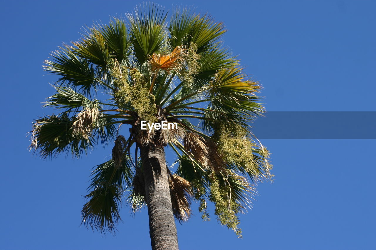 low angle view, tree, blue, clear sky, day, palm tree, growth, nature, tree trunk, outdoors, beauty in nature, no people, sky, close-up