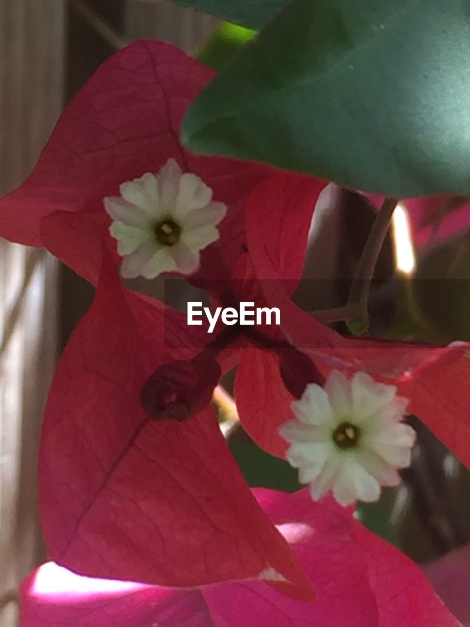 flower, petal, growth, fragility, beauty in nature, flower head, nature, freshness, no people, blossom, stamen, close-up, leaf, blooming, springtime, day, plant, outdoors, hibiscus