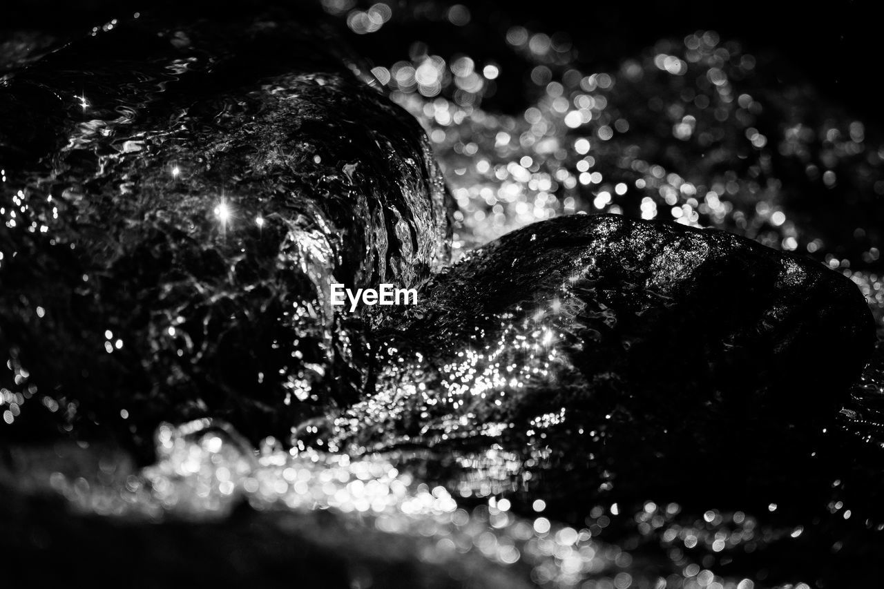night, no people, close-up, outdoors, water, nature, animal themes