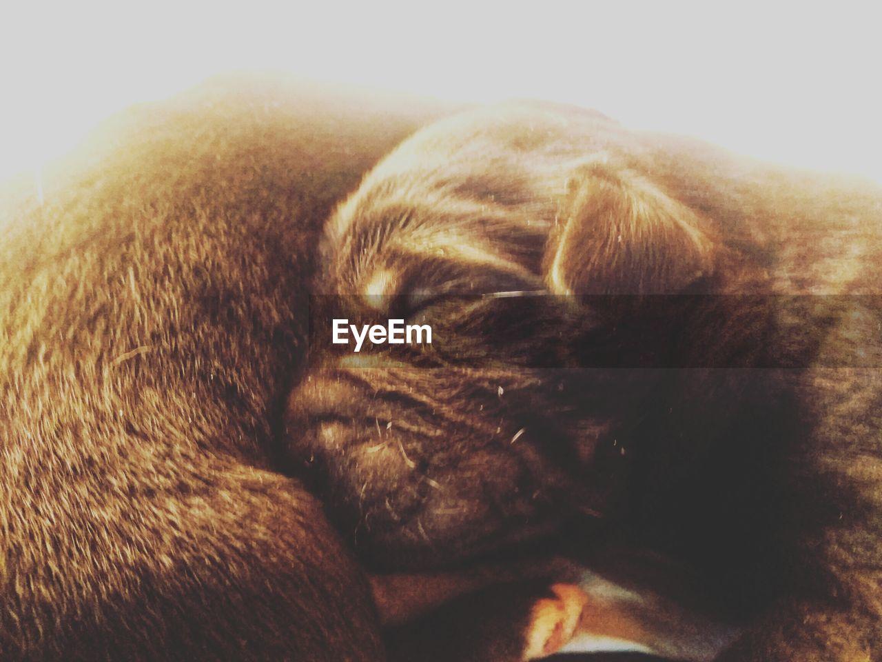 CLOSE-UP OF DOG SLEEPING ON CARPET