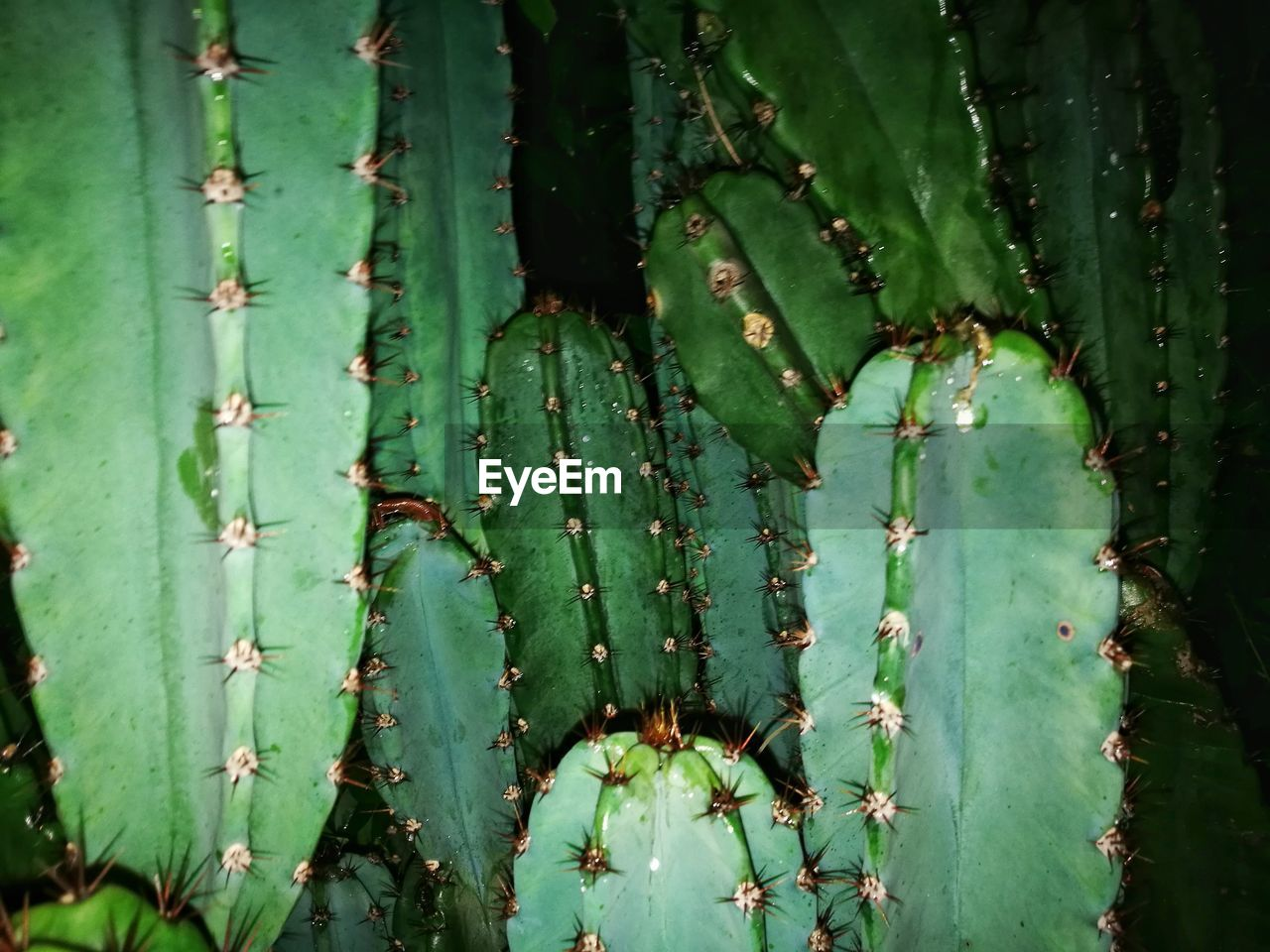 Close-up of cactuses at night