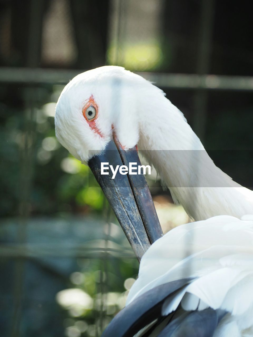 bird, one animal, animal themes, animals in the wild, beak, animal wildlife, white color, close-up, focus on foreground, no people, day, nature, outdoors, parrot, perching, cockatoo