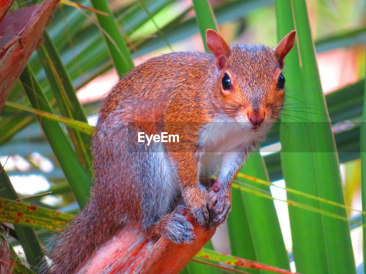 animal themes, one animal, animal, animal wildlife, mammal, rodent, animals in the wild, squirrel, close-up, vertebrate, no people, focus on foreground, day, green color, plant, nature, plant part, leaf, outdoors, brown, animal head, whisker