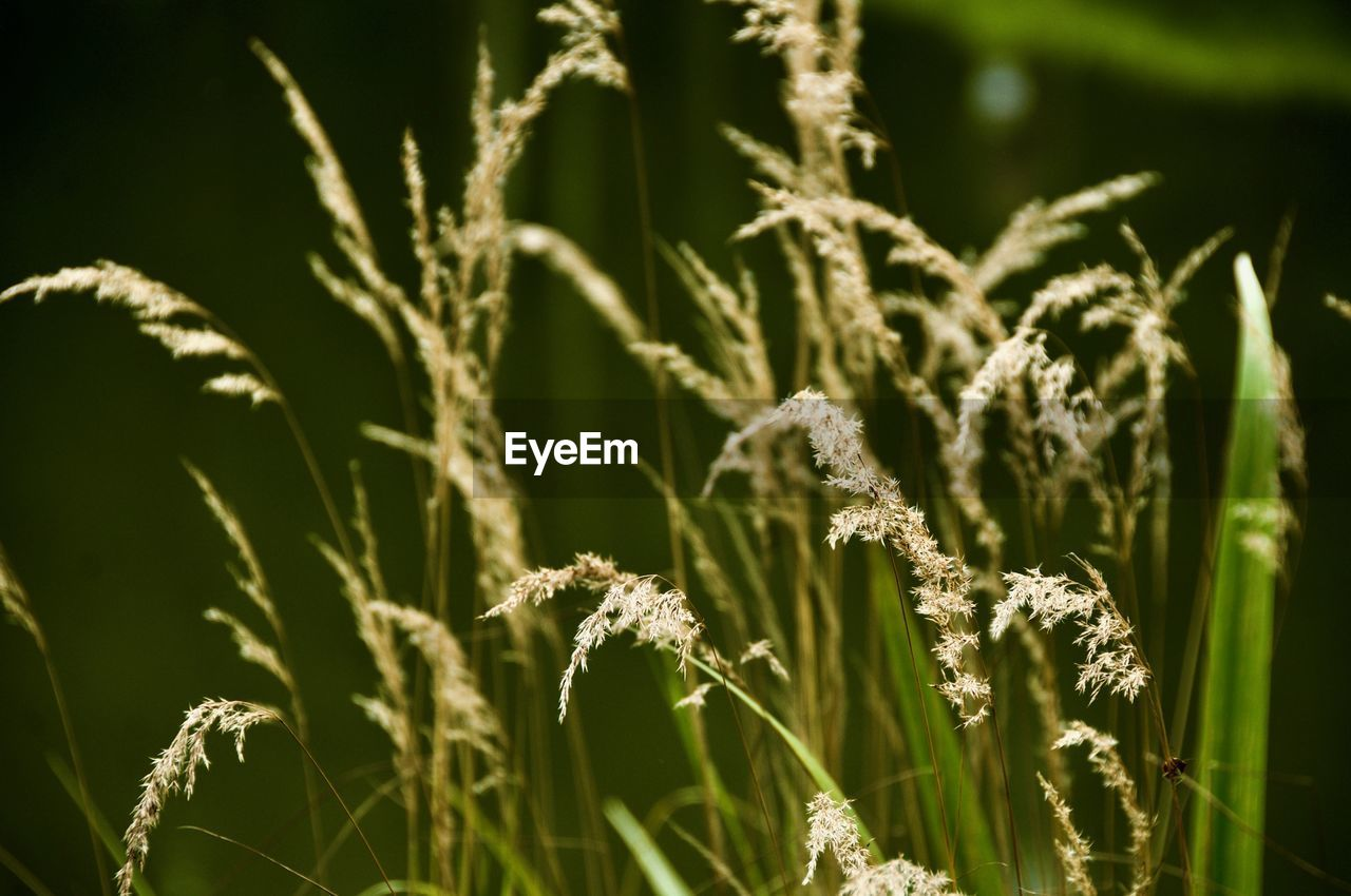 plant, beauty in nature, growth, close-up, nature, no people, day, selective focus, focus on foreground, green color, fragility, vulnerability, tranquility, flower, outdoors, field, freshness, flowering plant, land, plant stem