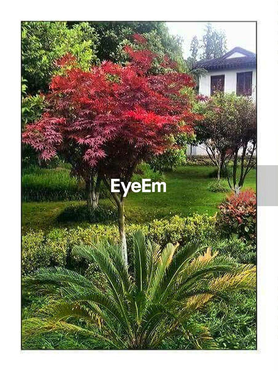 growth, garden, spring, vegetation, nature, grass, foliage, tree, no people