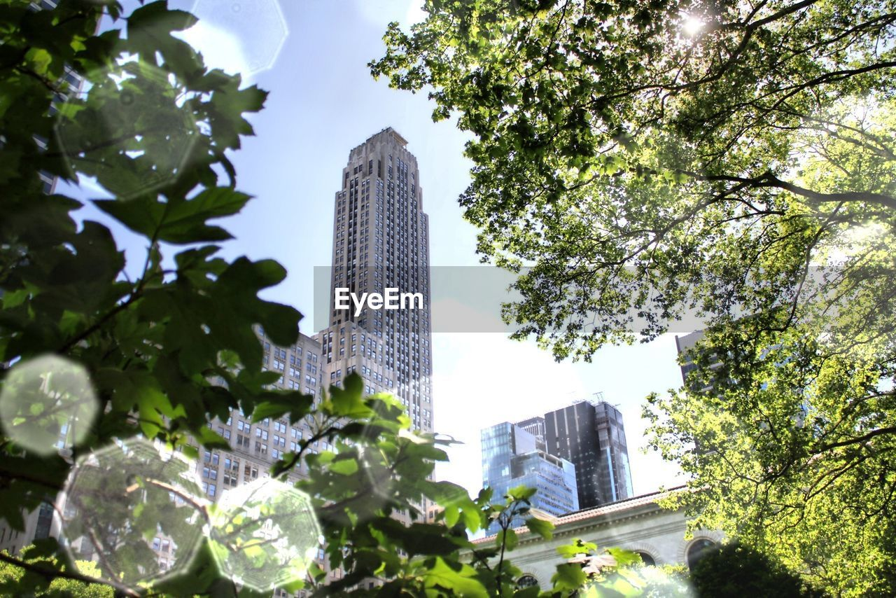 Low Angle View Of Skyscraper Amidst Leaves