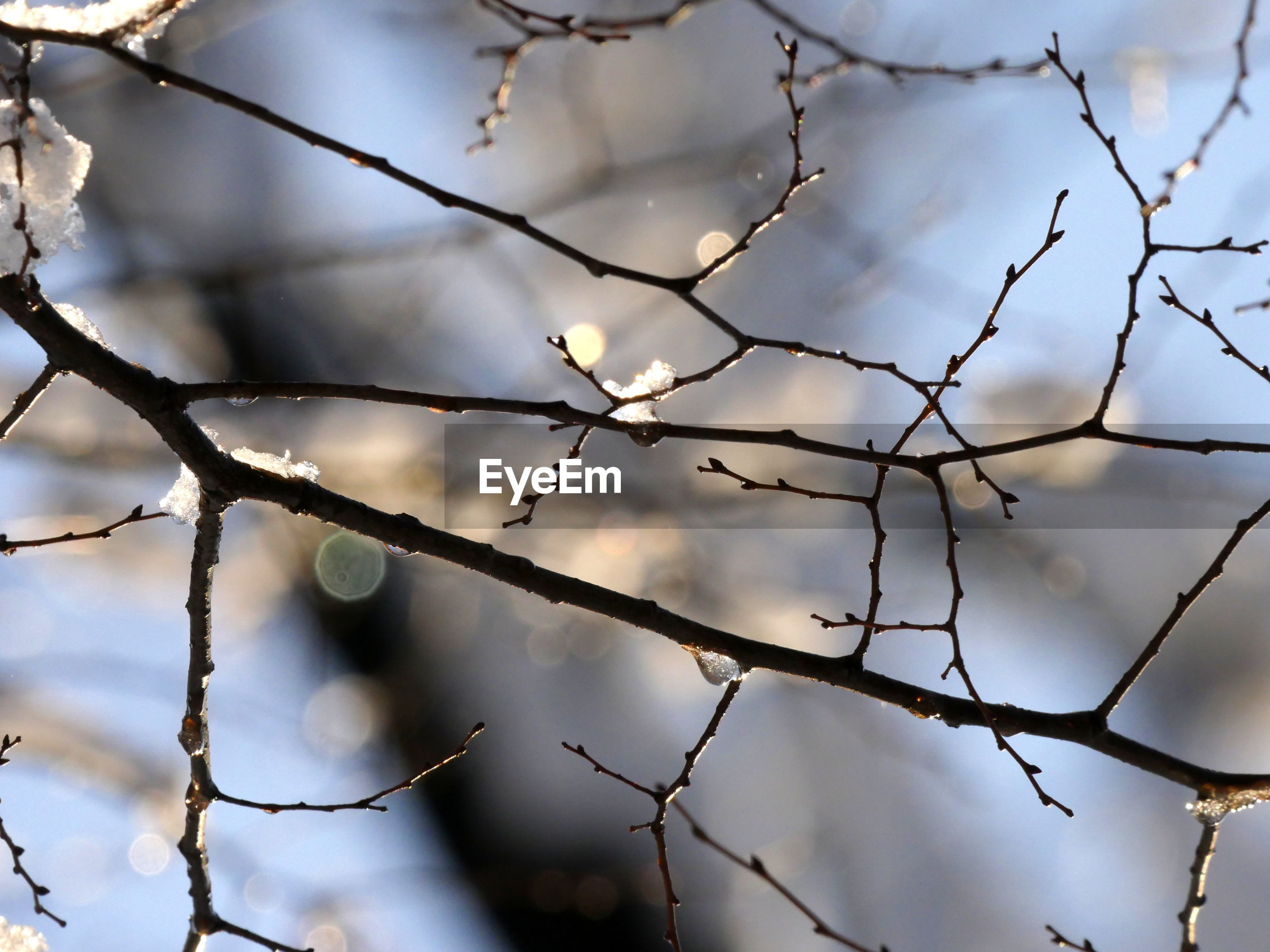 CLOSE UP OF BRANCHES