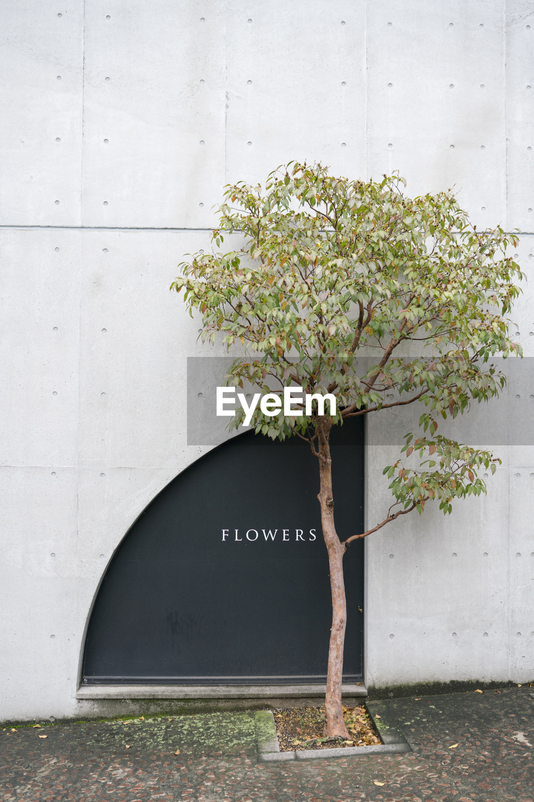 TREE IN FRONT OF WHITE WALL WITH TEXT