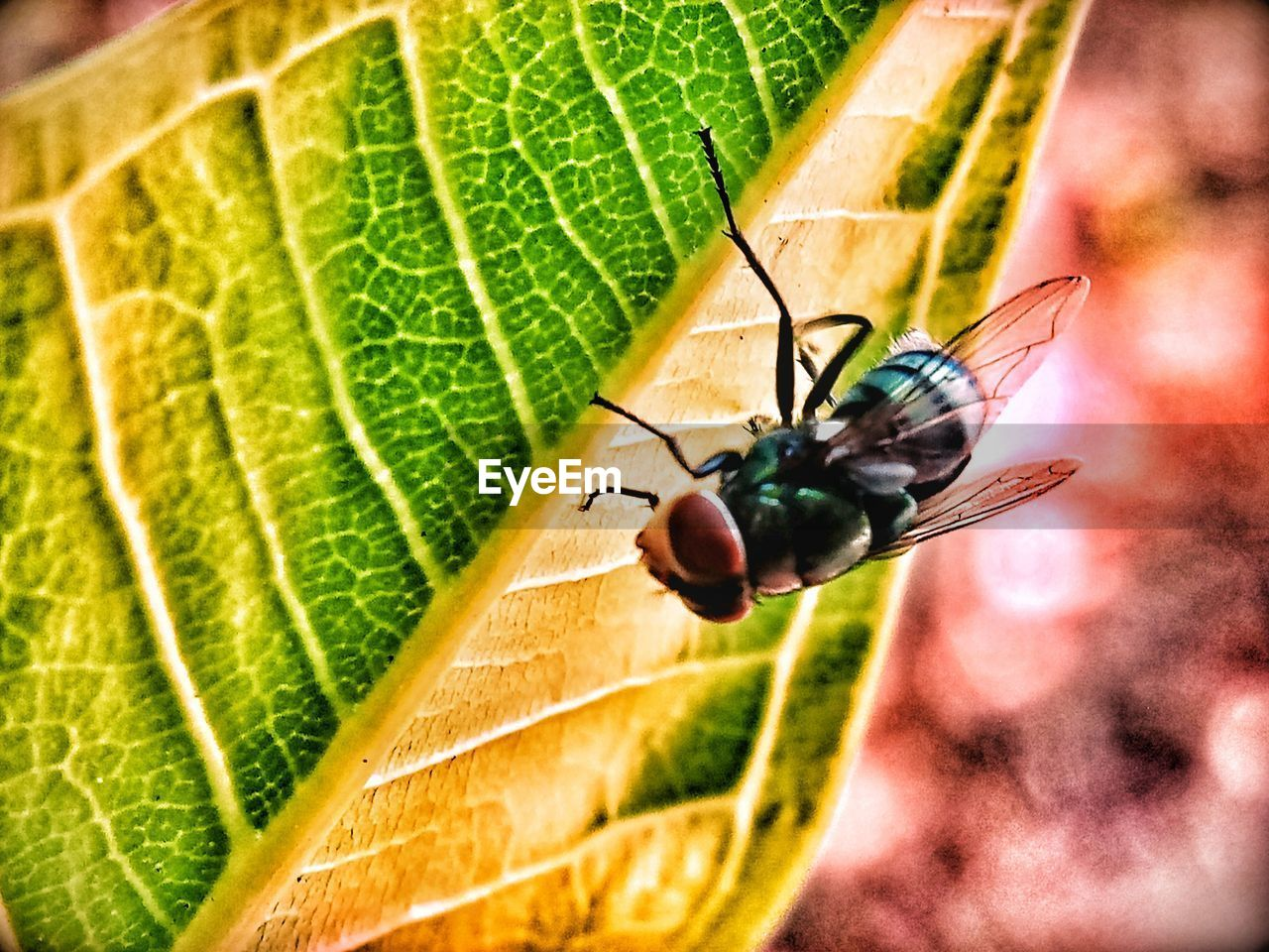 invertebrate, insect, leaf, plant part, animal themes, animal wildlife, animal, one animal, animals in the wild, close-up, green color, no people, day, plant, nature, focus on foreground, leaf vein, animal wing, outdoors, selective focus