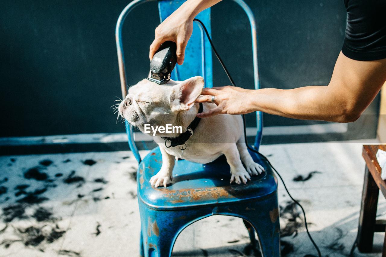 Cropped Groomer Shaving French Bulldog At Barber Shop