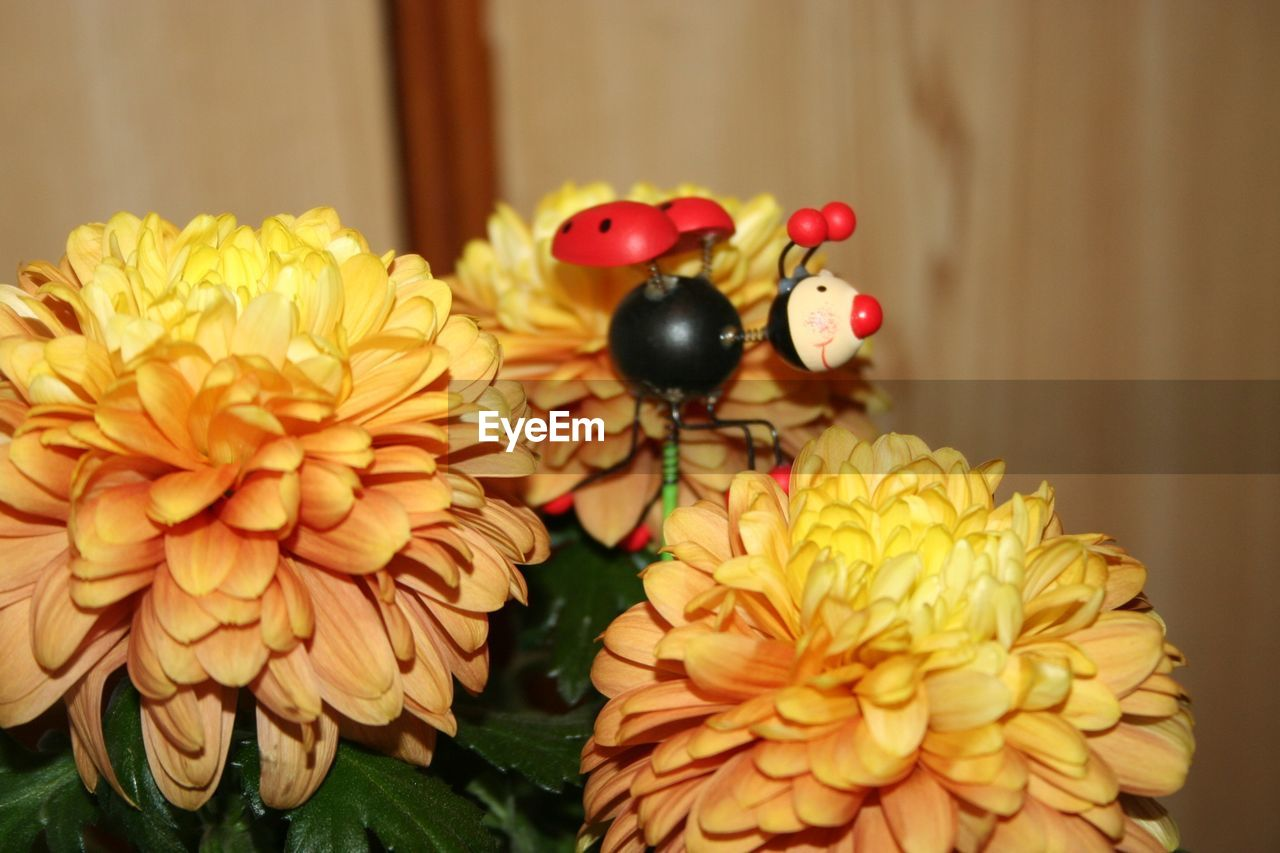 Ladybug Toy On Flowers