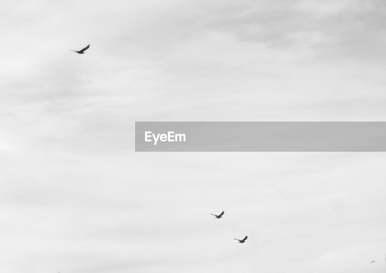 flying, mid-air, bird, low angle view, parachute, kite, animal themes, spread wings, one animal, sky, animals in the wild, day, outdoors, paragliding, nature, adventure, real people, beauty in nature