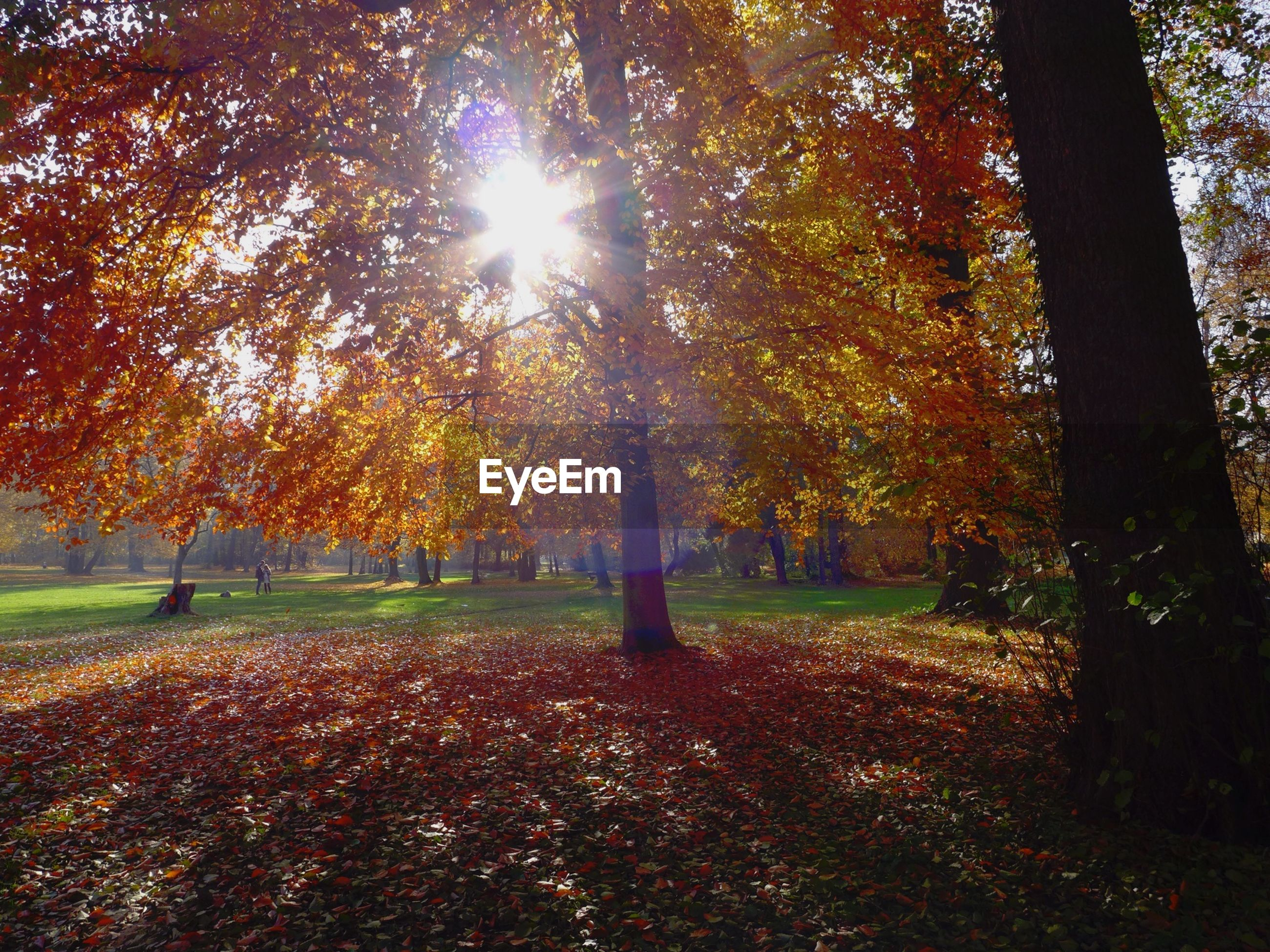 Autumn trees growing in park against bright sun
