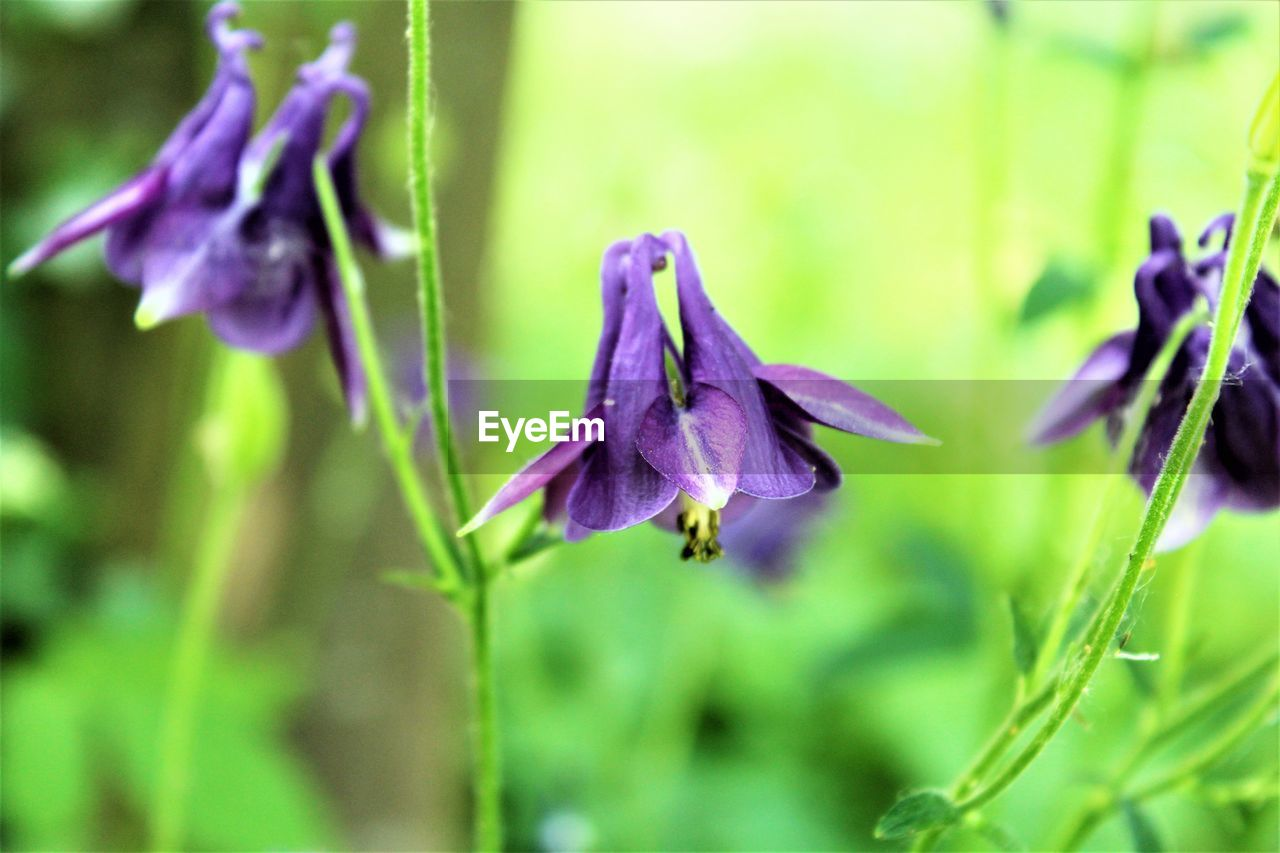 purple, flower, fragility, beauty in nature, nature, growth, petal, focus on foreground, no people, freshness, plant, day, flower head, close-up, outdoors, iris - plant, blooming, water