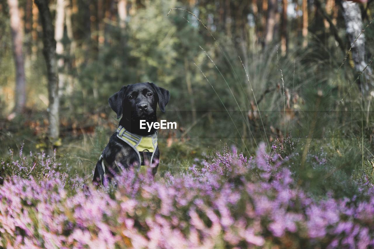 Portrait of black dog sitting on field