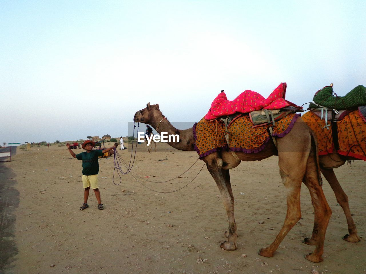 camel, domestic animals, working animal, animal themes, sand, desert, mammal, clear sky, one animal, outdoors, sky, real people, full length, nature, day, one person, people