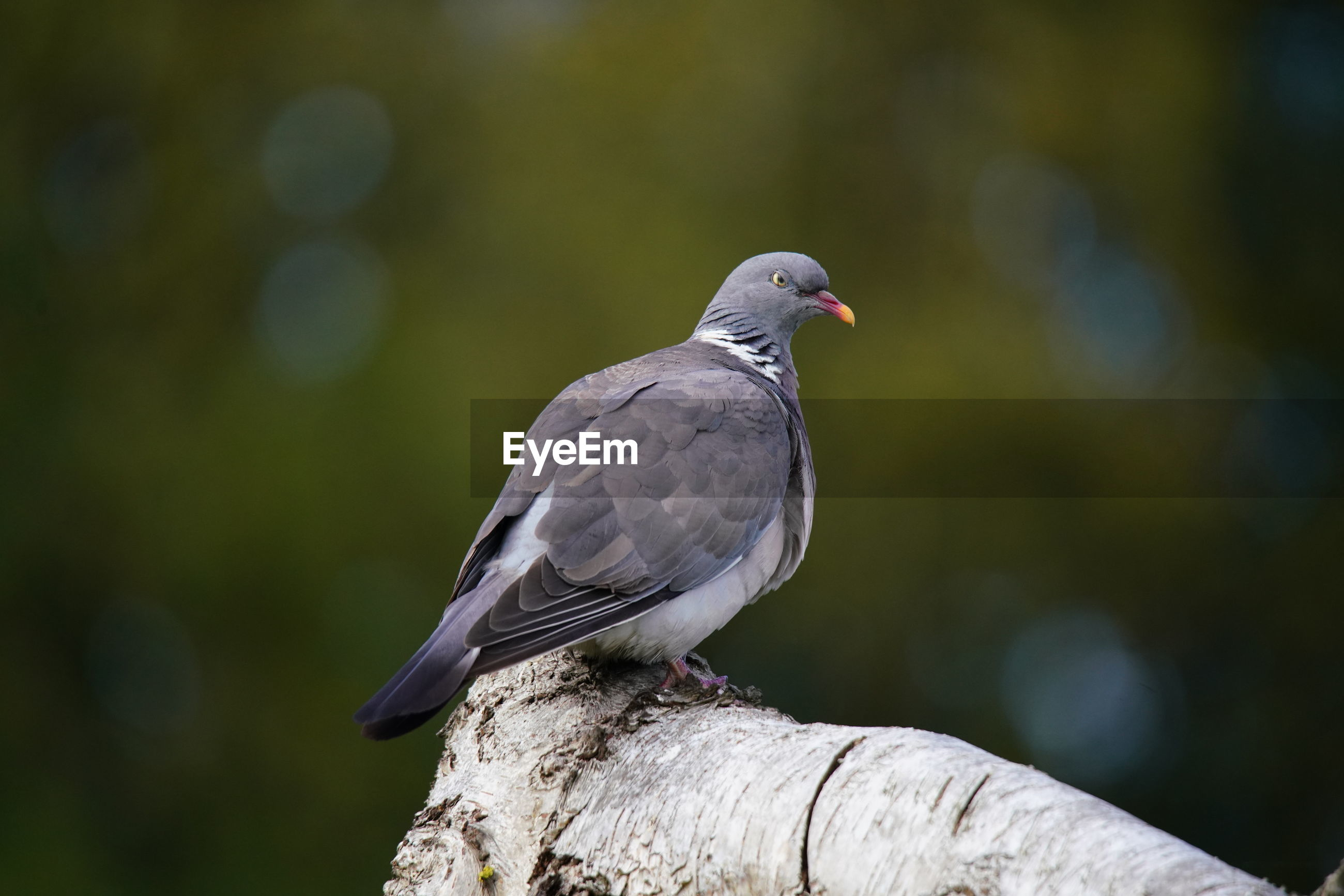 CLOSE-UP OF BIRD PERCHING ON A TREE