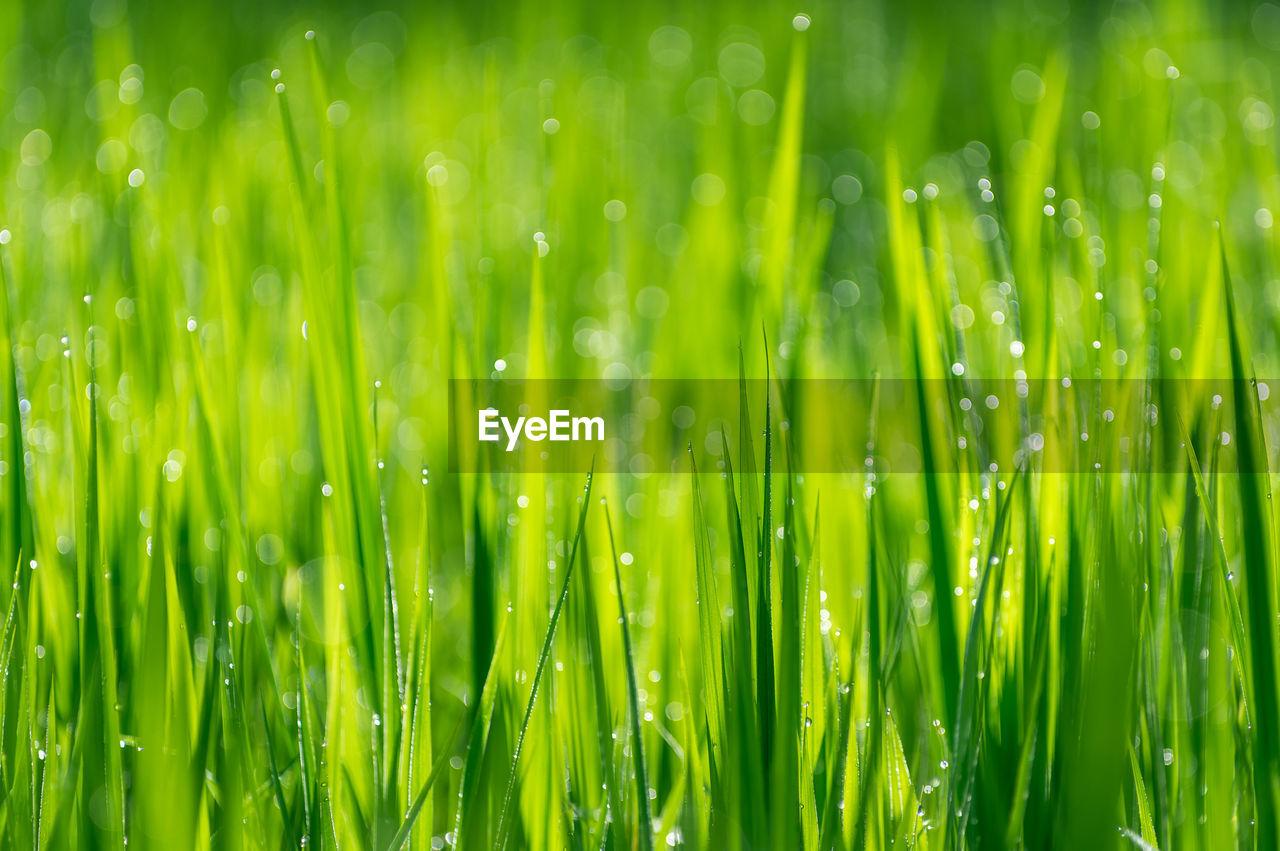 Full Frame Shot Of Wet Plants On Field