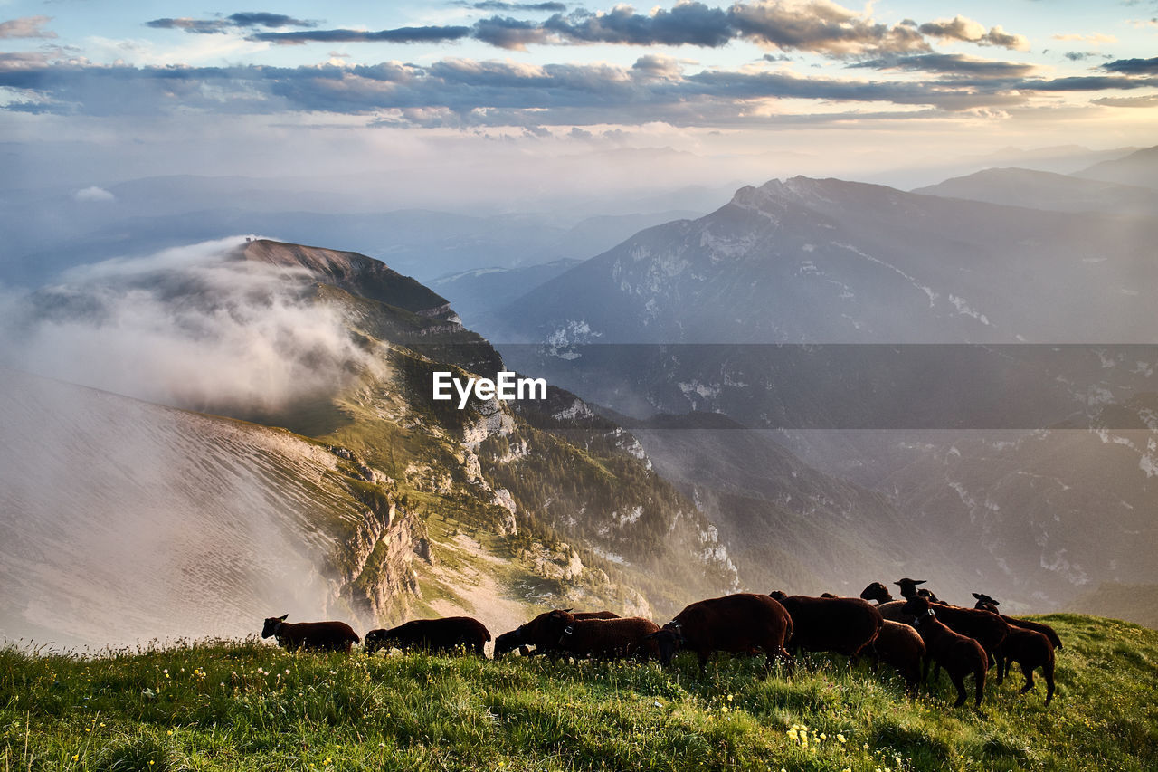 High Angle View Of Sheep On Landscape