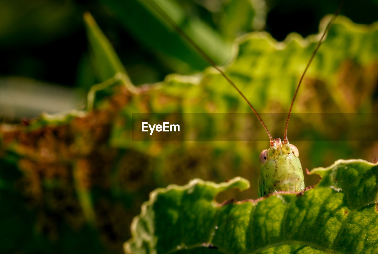 green color, close-up, one animal, focus on foreground, growth, insect, no people, animals in the wild, plant, animal themes, nature, day, outdoors, animal wildlife, leaf, beauty in nature, freshness