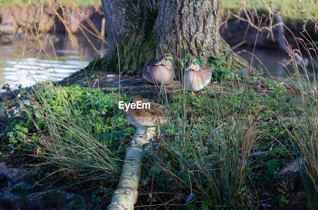 plant, bird, nature, animal themes, animal, day, land, vertebrate, animals in the wild, animal wildlife, group of animals, tree, grass, water, growth, trunk, no people, tree trunk, lake, field, outdoors, animal family