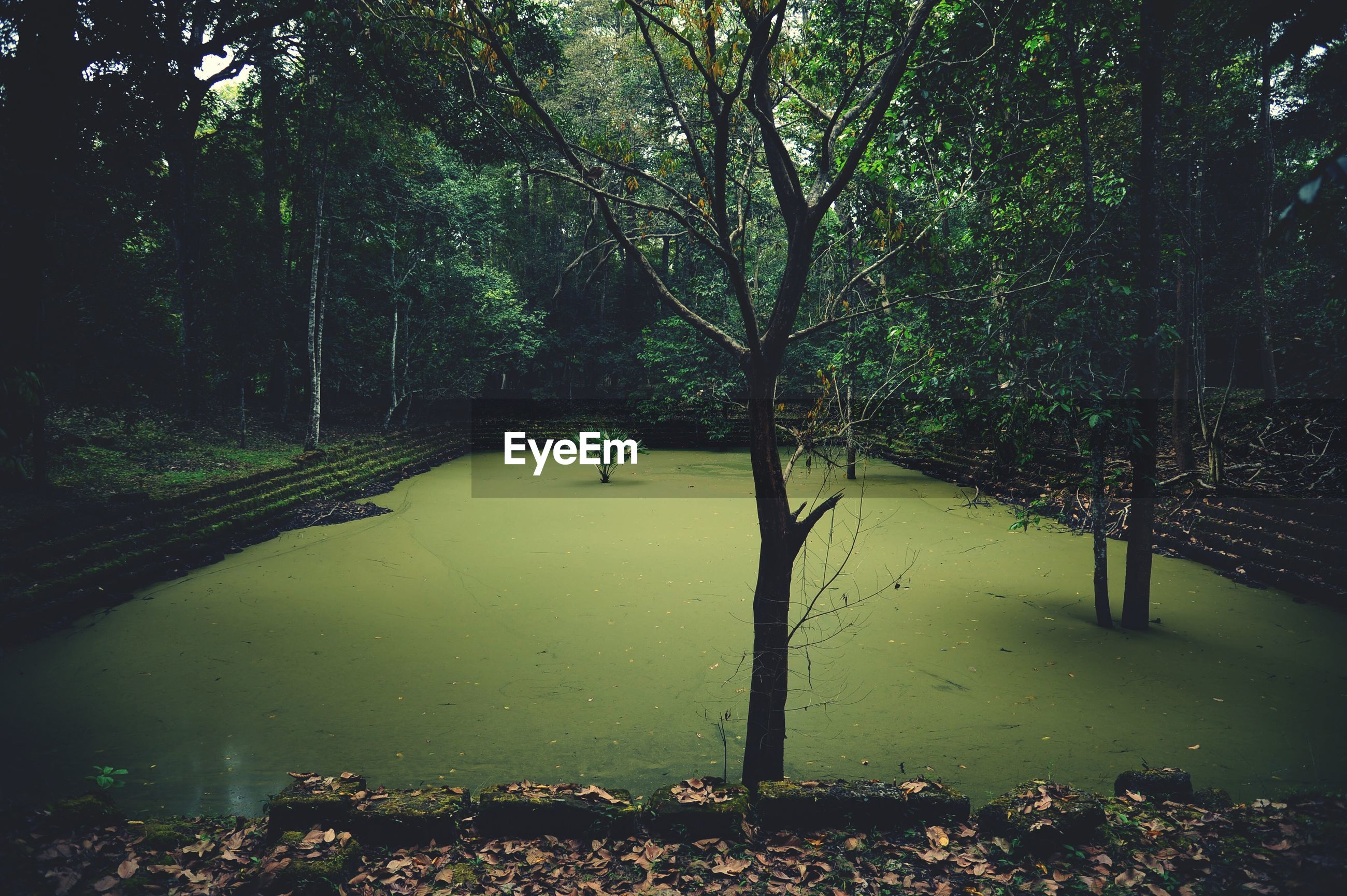 Dirty pond amidst trees