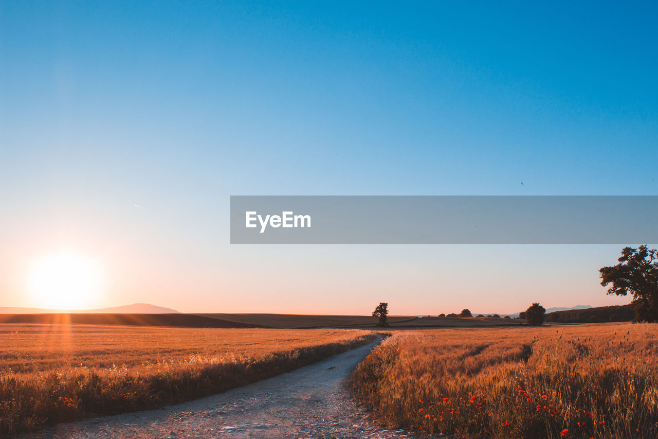sky, landscape, beauty in nature, environment, field, scenics - nature, tranquility, tranquil scene, land, plant, nature, road, copy space, direction, clear sky, the way forward, blue, sun, no people, sunset, outdoors