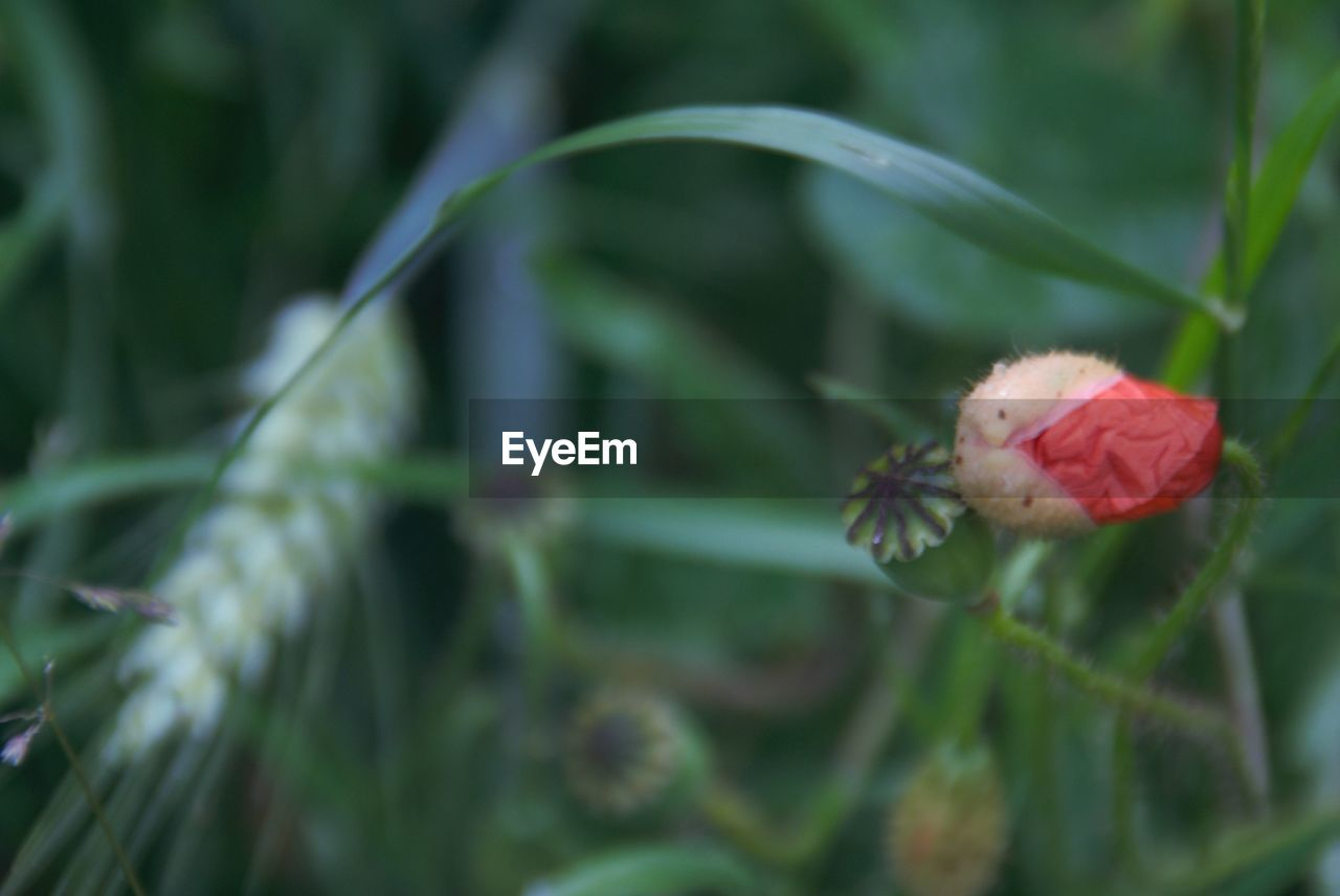 growth, nature, flower, plant, green color, fragility, beauty in nature, red, no people, day, new life, close-up, outdoors, freshness, flower head, animal themes