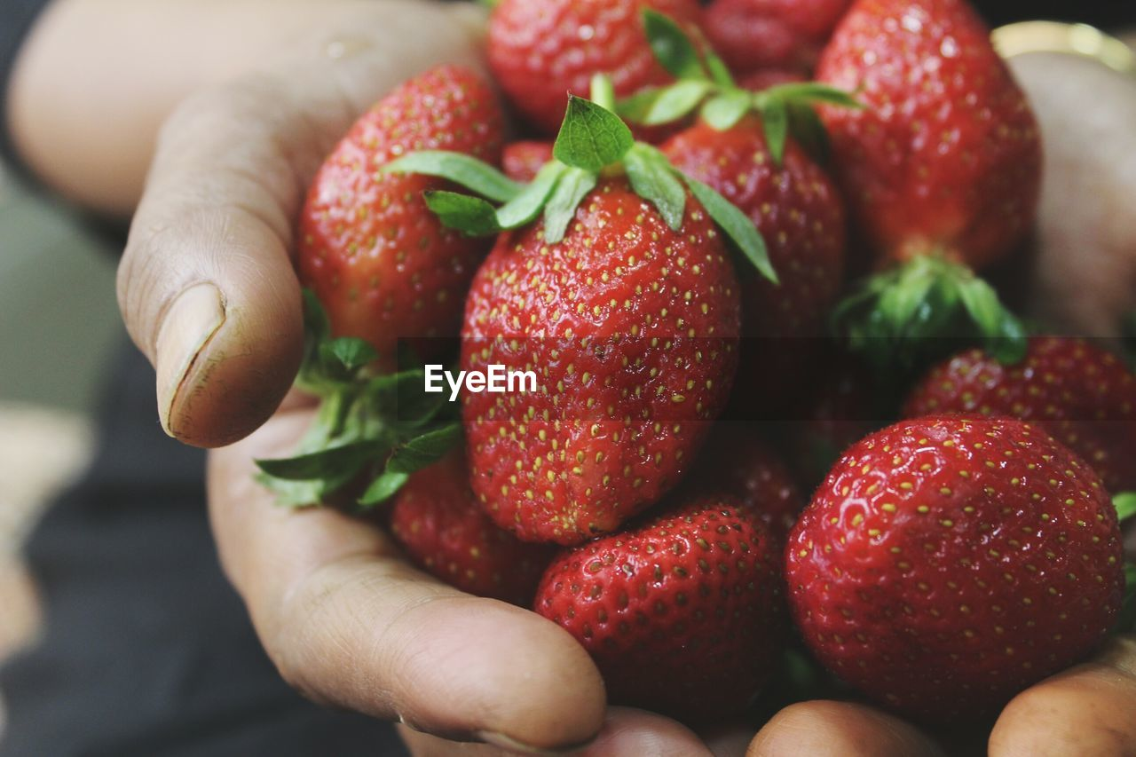 Close-Up Of Hands Holding Strawberries