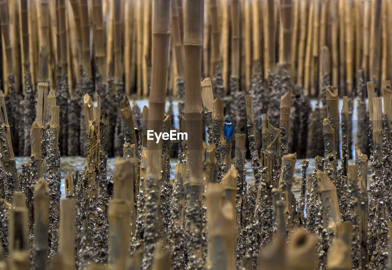 Full Frame Shot Of Bamboos In Lake