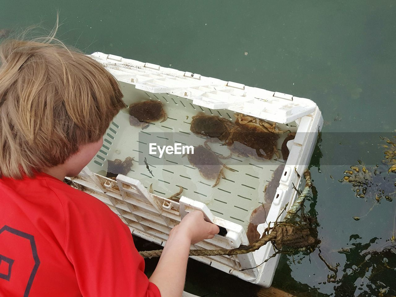 High angle view of boy looking at crabs in plastic crate