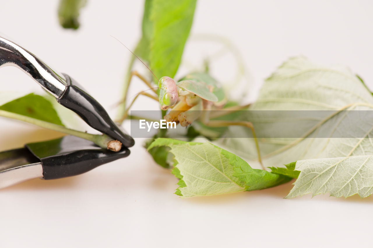 Close-up of insect on leaf by equipment against white background