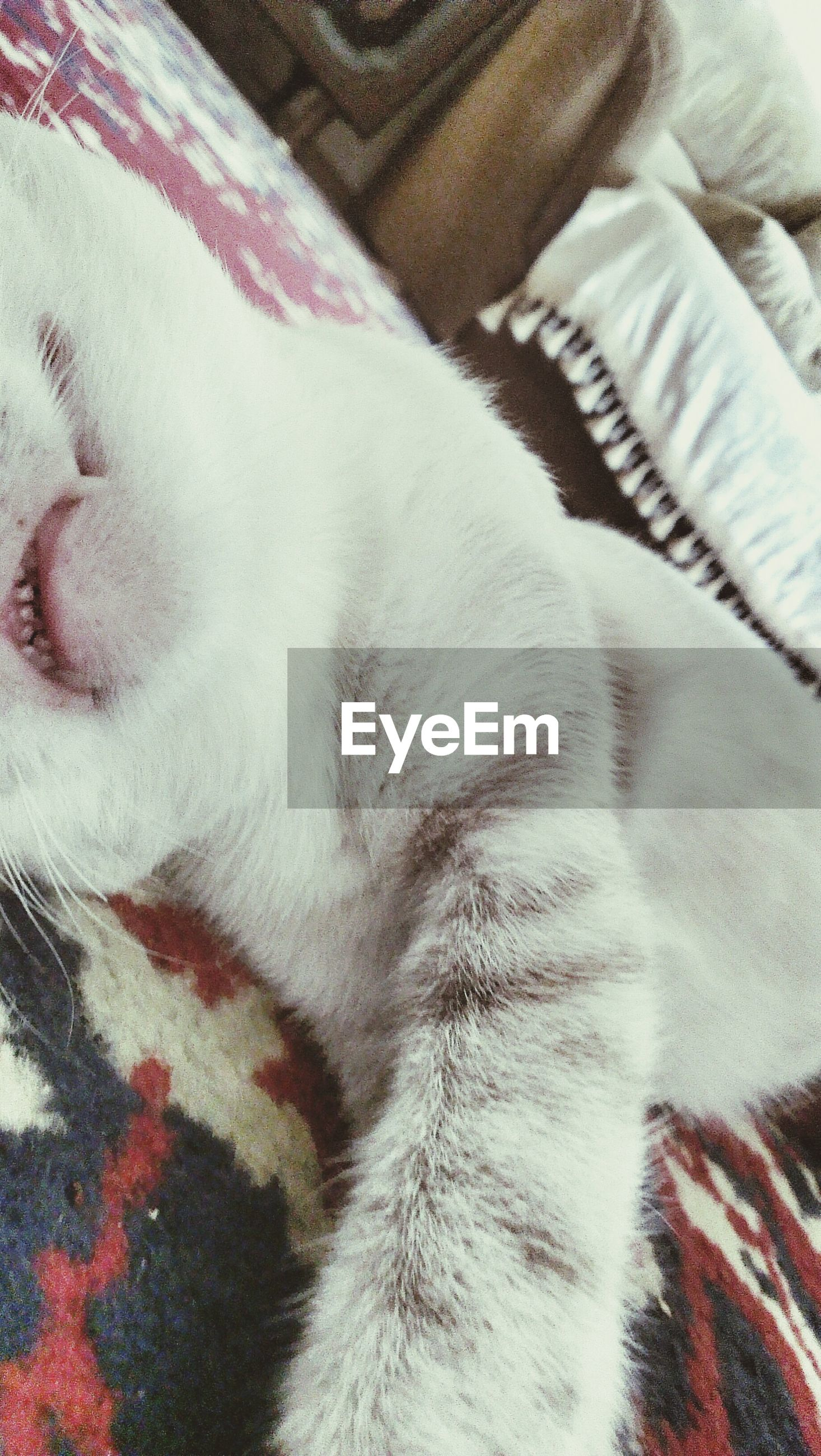 domestic animals, indoors, pets, mammal, animal themes, one animal, bed, domestic cat, relaxation, cat, sleeping, close-up, white color, feline, resting, home interior, textile, fabric, lying down, part of