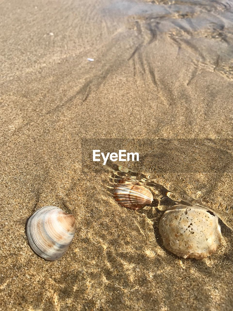 sand, animal shell, beach, animal themes, nature, animals in the wild, no people, high angle view, outdoors, seashell, day, gastropod, sunlight, one animal, hermit crab, sea life, close-up, beauty in nature