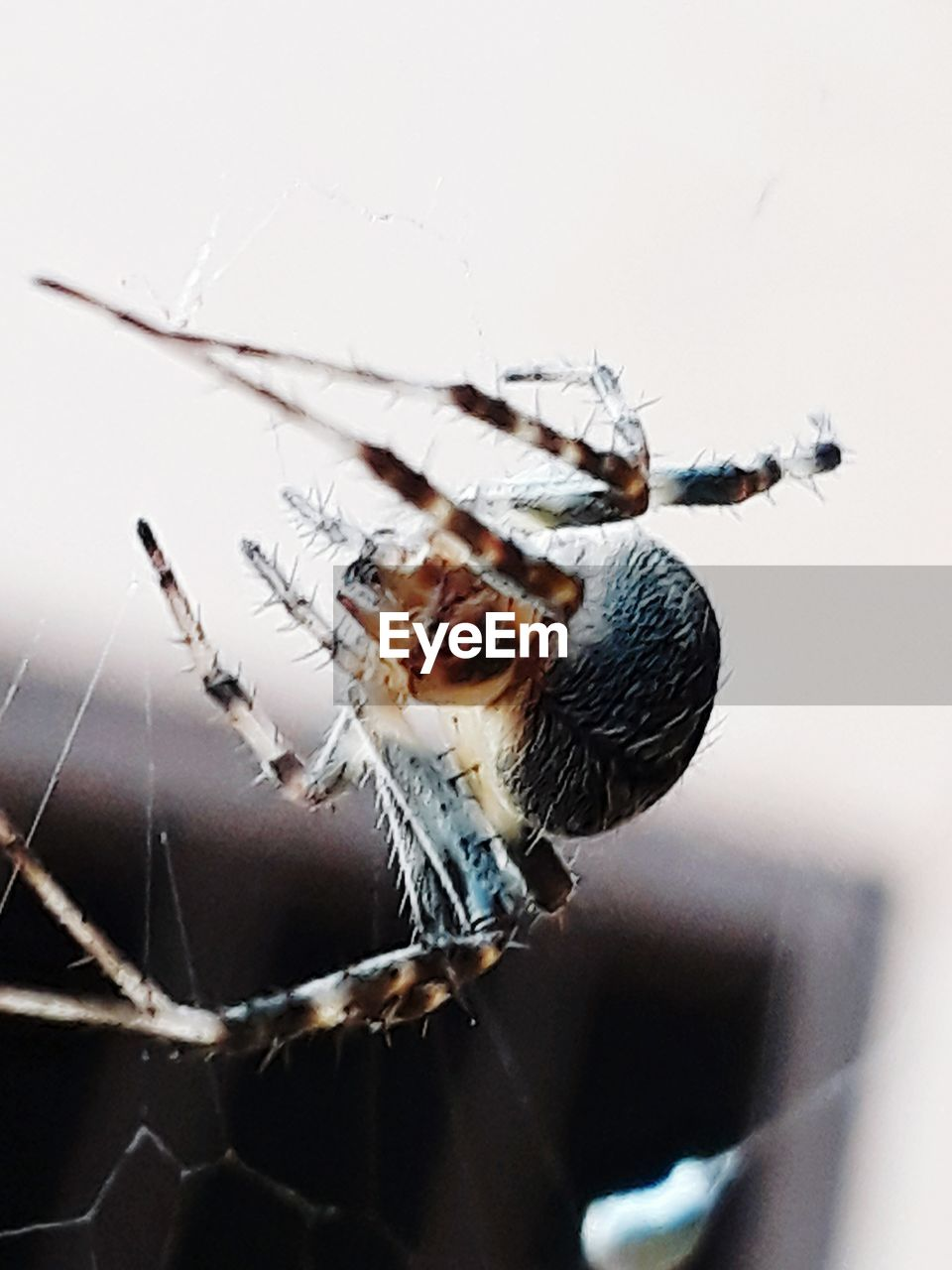 insect, invertebrate, animal themes, one animal, animals in the wild, animal wildlife, animal, close-up, spider, arthropod, arachnid, spider web, focus on foreground, fragility, no people, day, zoology, selective focus, animal wing, macro, outdoors, animal leg