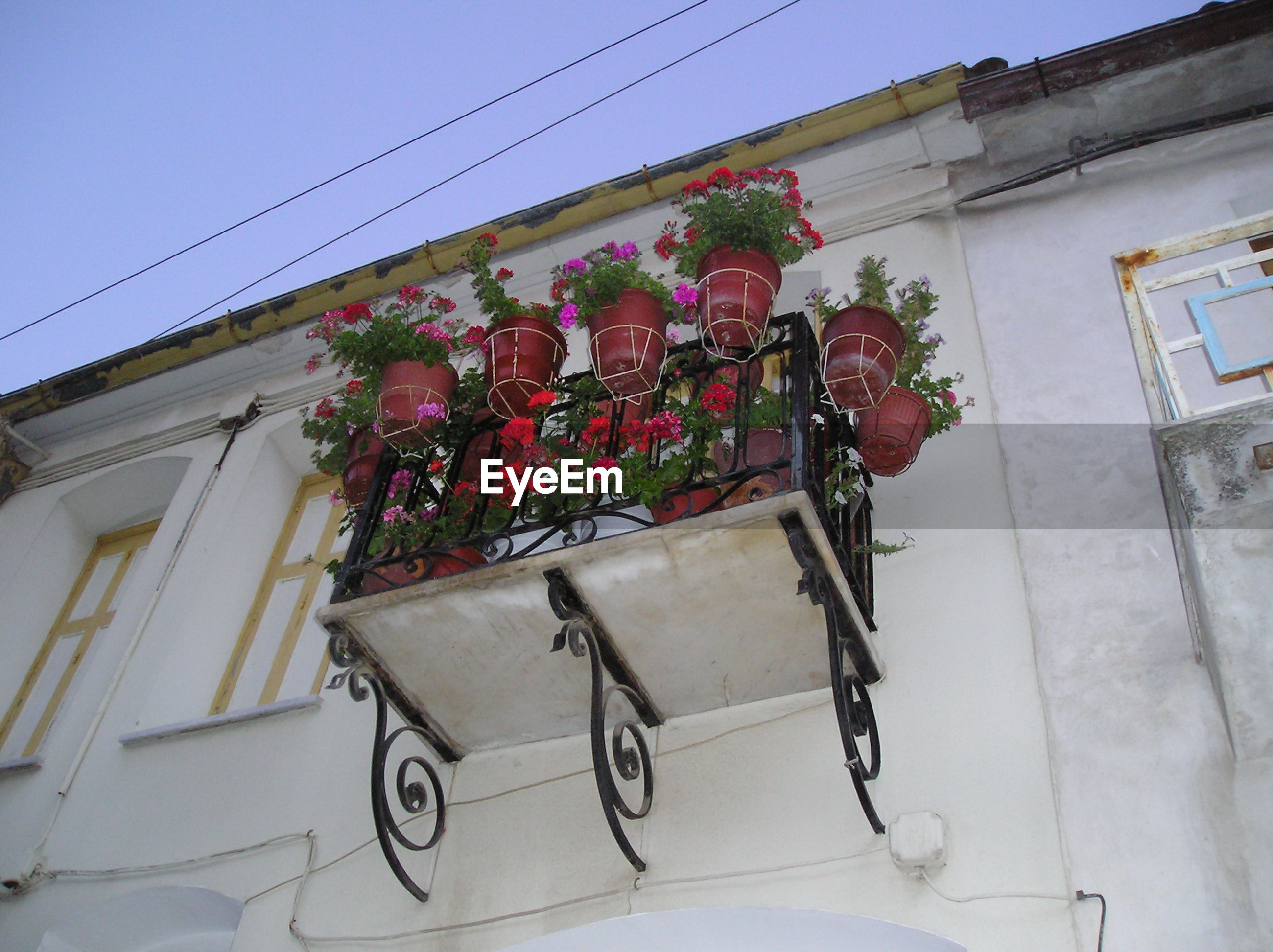 Low angle view of potted plants on balcony railing