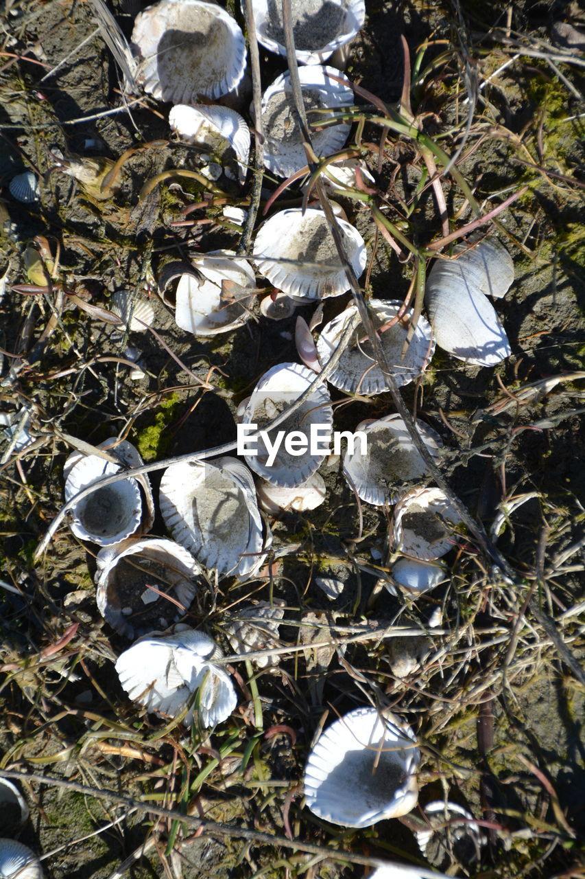 High angle view of seashells on field