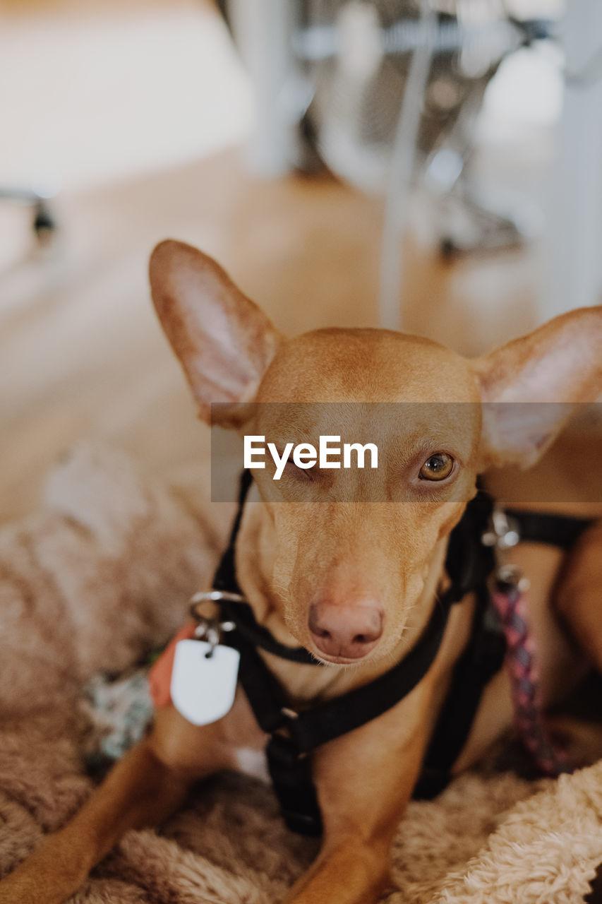 Close-up portrait of dog winking