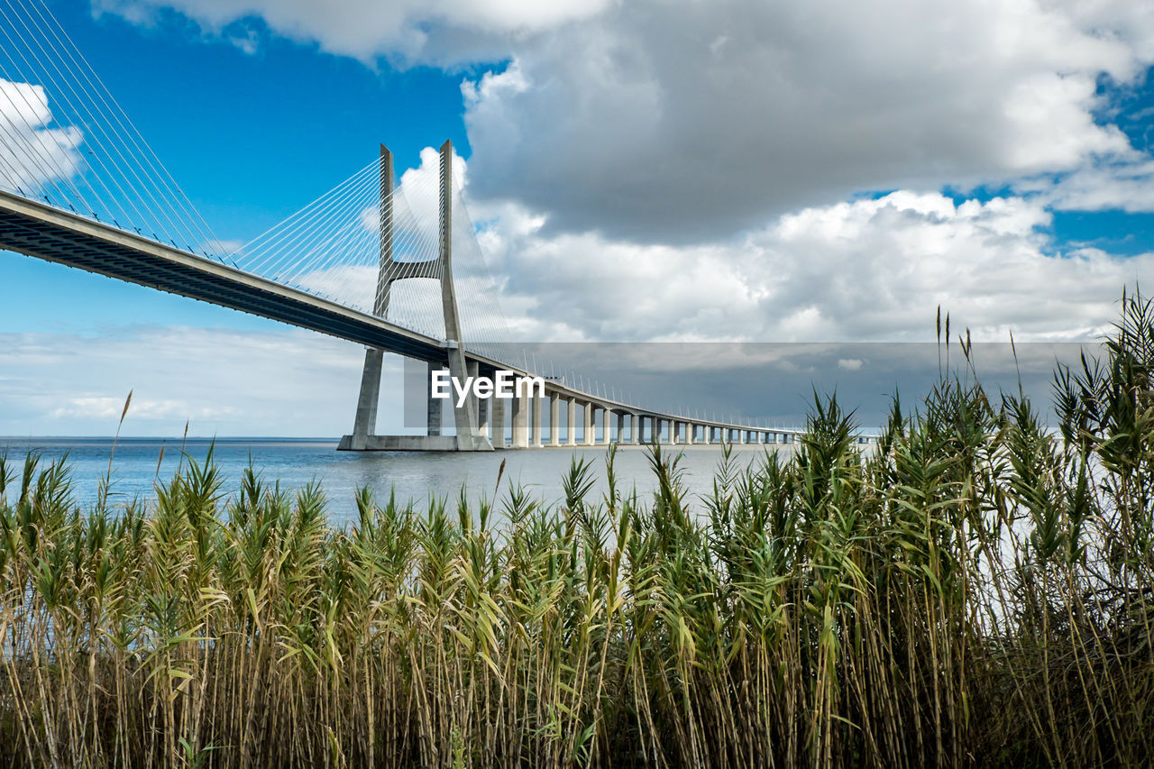 sky, cloud - sky, bridge, plant, bridge - man made structure, connection, nature, water, day, built structure, no people, growth, architecture, beauty in nature, transportation, land, low angle view, outdoors