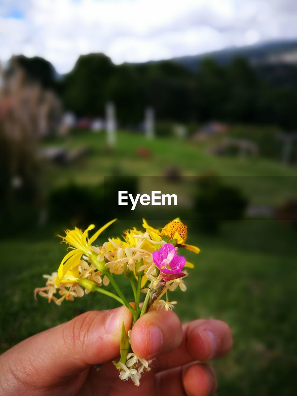 Cropped hand of person holding flowers