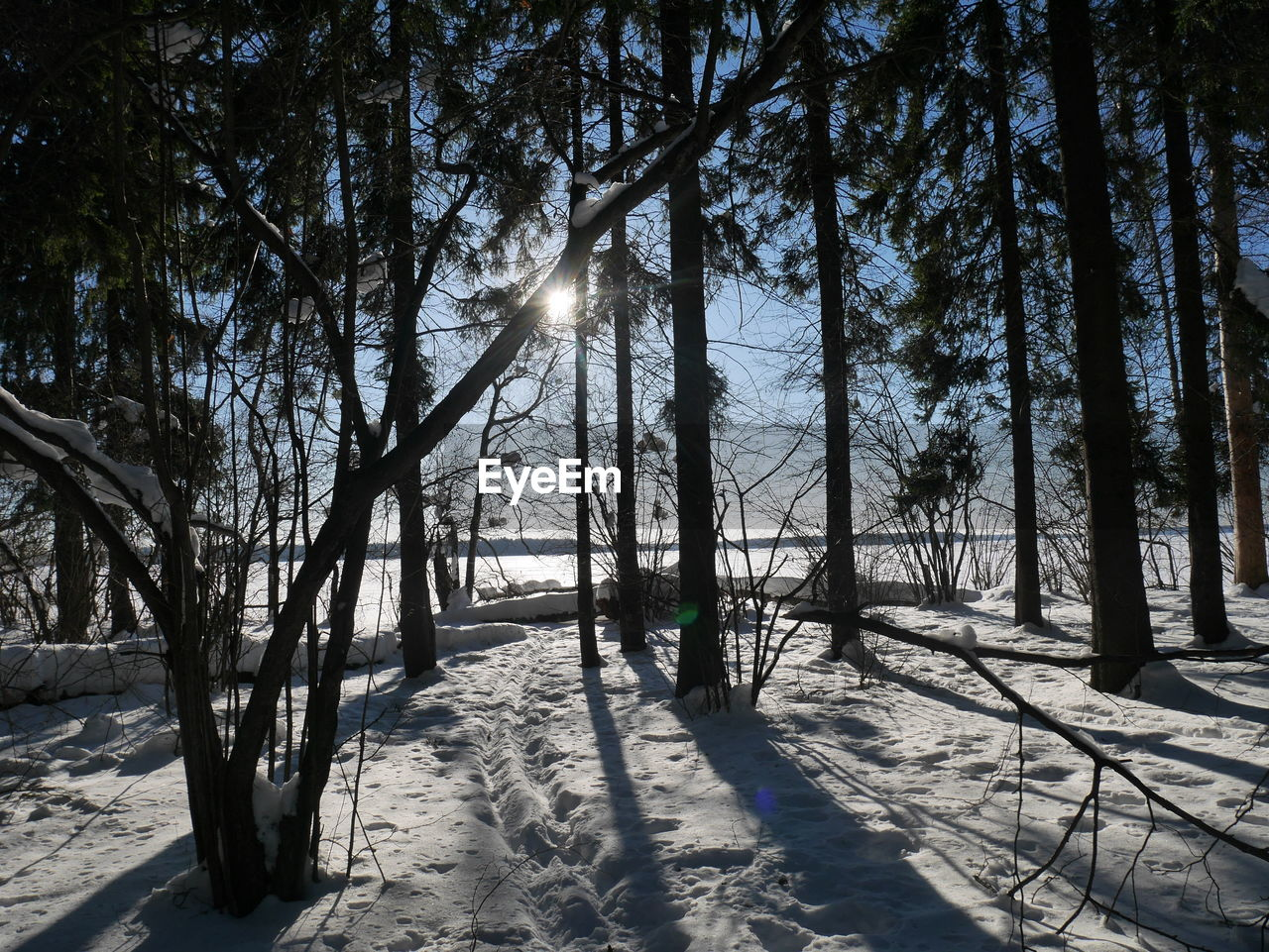tree, nature, snow, sunlight, winter, cold temperature, beauty in nature, tranquil scene, tranquility, outdoors, landscape, scenics, day, shadow, no people, tree trunk, forest, sky, branch